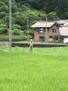 広島県の加計にて農薬散布致しました!【ドローン散布】